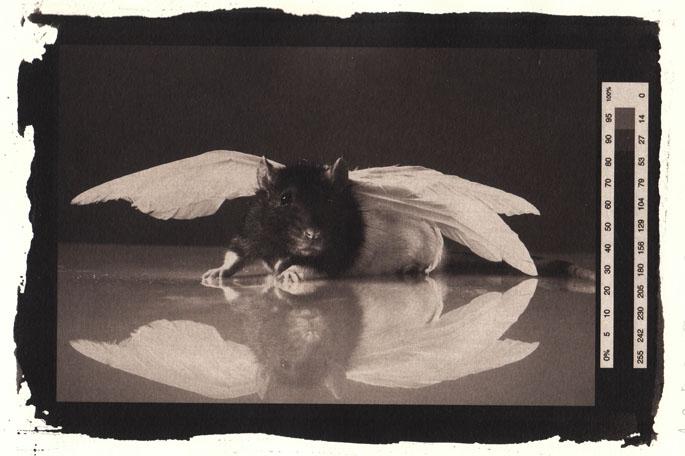 Persephone in Wings by majuviro
