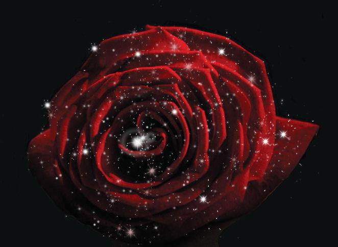 Stardust Rose by Lavender341 on DeviantArt