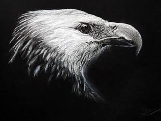 Eagle by GradiamArts