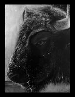 Bison by Wilku1000i1