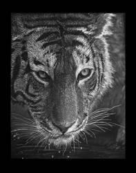 Tiger by GradiamArts