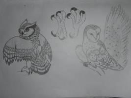 More Owl Practice by LionBolt369