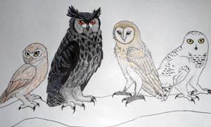 Owl Friends by LionBolt369