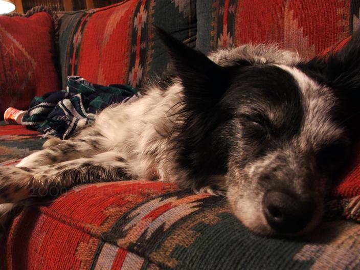 Sleepy Dutchy by thatbloodypirate