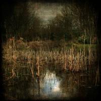 listen to the rain by AlicjaRodzik
