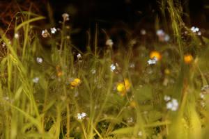 happy grassland by AlicjaRodzik