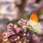 sweet sweet by AlicjaRodzik