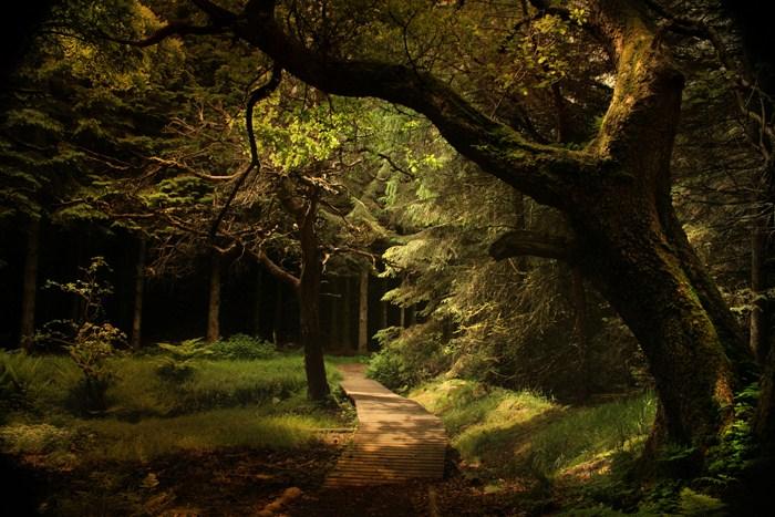 welcome to ....fairy...tale... by AlicjaRodzik