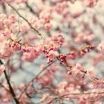 I love spring by AlicjaRodzik