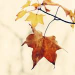 festival of leaves by AlicjaRodzik