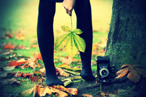 the poetry of leaves by AlicjaRodzik