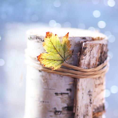 waiting for winter by AlicjaRodzik