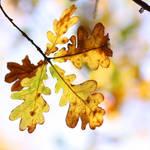 oak whispers by AlicjaRodzik