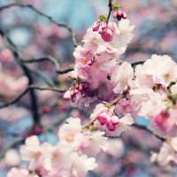 tell me about Spring by AlicjaRodzik