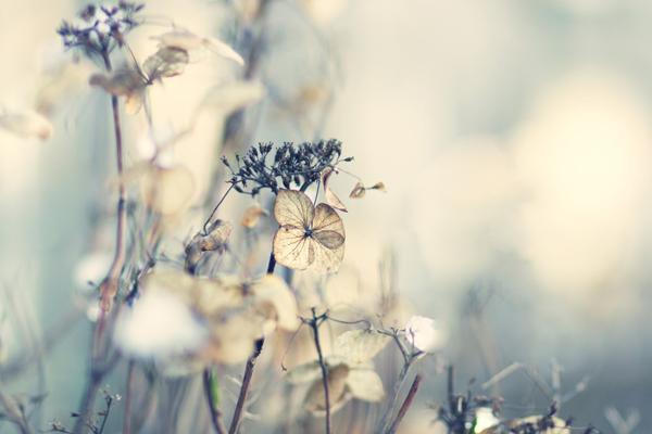enjoy solitude by AlicjaRodzik