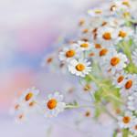 You Don't Bring Me Flowers by AlicjaRodzik