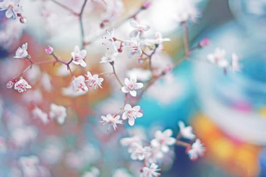 blossoms in dreams