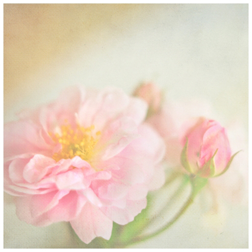 fragrant poetry by AlicjaRodzik