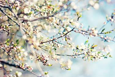 SpringForever by AlicjaRodzik