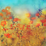 wisdom of bloom