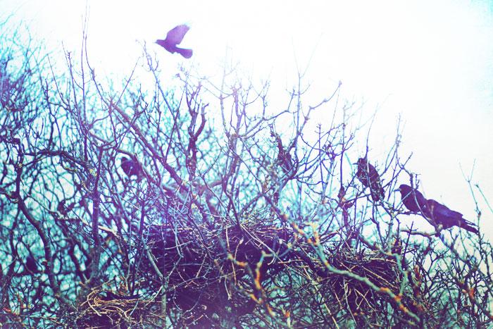 birds by AlicjaRodzik