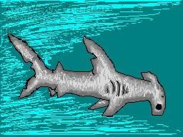 Hammer-Head Shark by Faith-Bailey