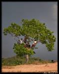 Guyana 2009 - Day 242