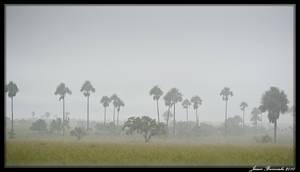Guyana 2010 - Day 387 by jmbroscombe