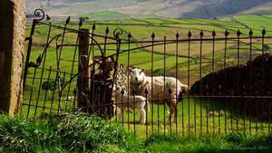 Digley Sheep by jmbroscombe