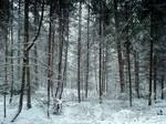 Snow at Longleat