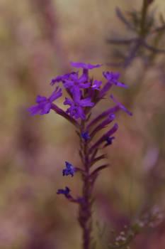 flower again