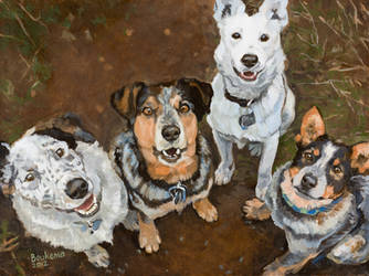 Cattledogs by DBArtworks1