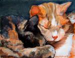 Snuggling Kitties