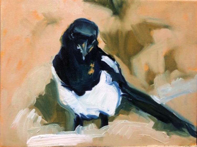 Snowbird Utah Magpie 750