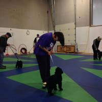 Bear doing Puppy Kindergarten game