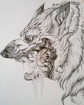 laughing wolf sketch