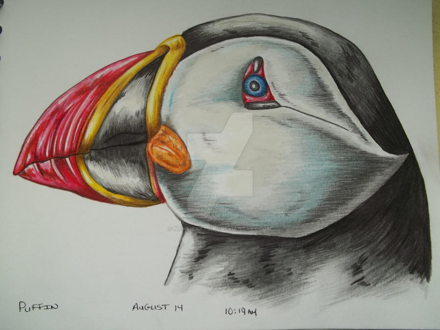 My Puffin Sketch by NewfieArtGirl