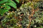 Lichen #2