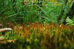 Moss #1