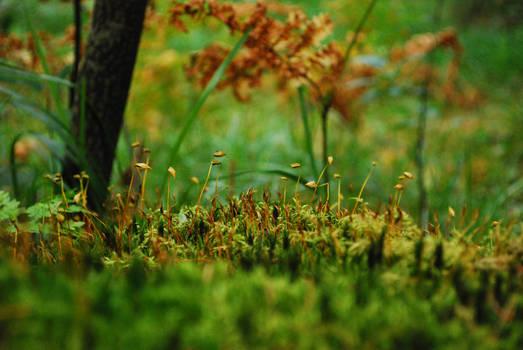Moss #2