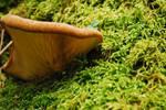 Unknown Mushroom #1