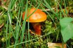 Unknown Mushroom #2