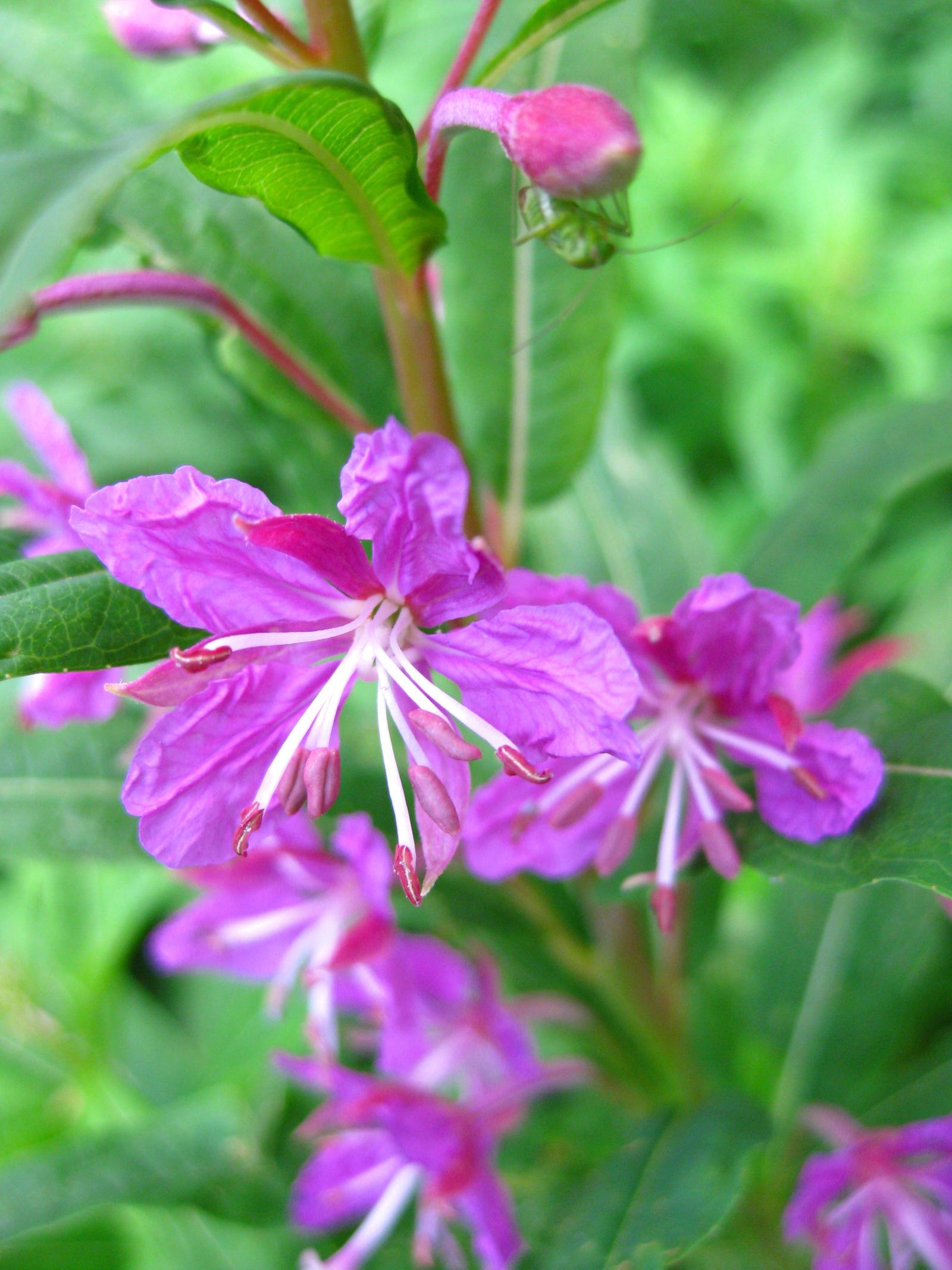 Purple-Violet Unknown Flower #2