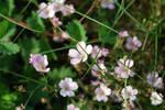 Small Wild flowers