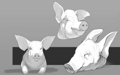 Piggy sketches