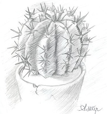 Cactus In A Pot By Ambair On DeviantArt