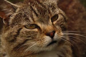 Random Cat2