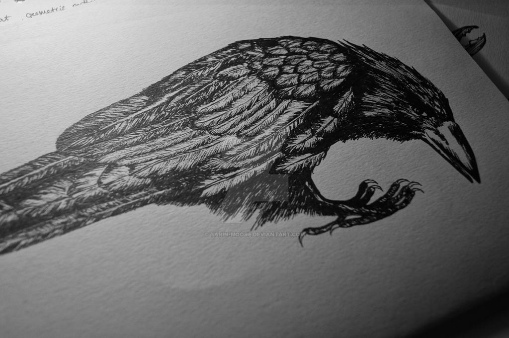 crow tattoo design by tarin moore on deviantart. Black Bedroom Furniture Sets. Home Design Ideas