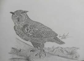 Eurasian eagle owl: King of Owls by ArminReindl