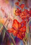 gladiolus's brilliance